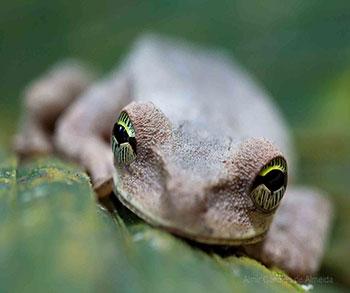 Anfibio na amazónia, por Almir Cándido de, en flickr.com