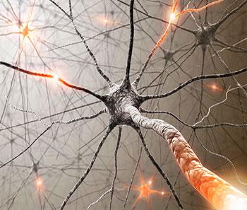 Imagen tomada de http://3.bp.blogspot.com/-kEq1- HH_TEQ/Ur2hN3FAGOI/AAAAAAAAGvg/zopbMdMjQEc/s160 0/Neurona.jpg