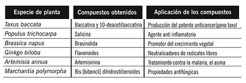 Tabla 1. La transcriptómica ha permitido conocer la forma en la que especies de plantas generan compuestos de importancia