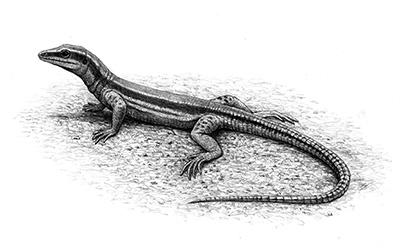 Reconstrucción de Pedrerasaurus por Mauricio Antón, imagen cortesía del Institut Català de Paleontologia Miquel Crusafont (C).