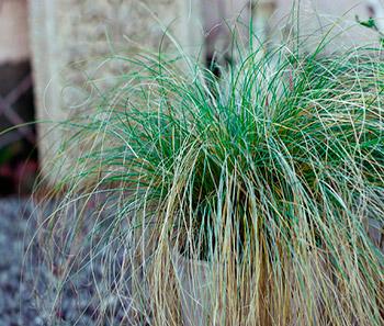 Crazy grass, por Philippe Clairo