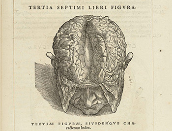 De humani corporis fabrica libri septem (1543). El anatomista holandés Andreas Vesalius hizo una de las primeras aproximaciones anatómicas al cerebro