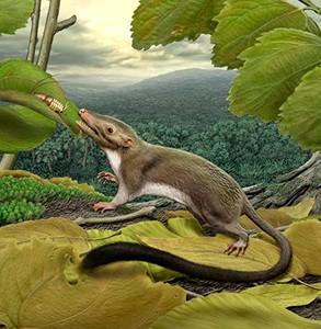 Reconstrucción del mamífero Mesozoico Juramaia sinensis, especie que habitó durante el Jurásico medio de China. Imagen tomada de https://www.amnh.org/explore/news-blogs/research-posts/tracing- the-face-and-age-of-the-placental-mammal-ancestor/