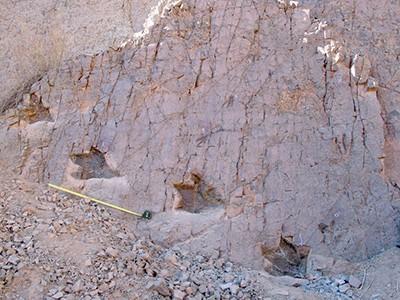Figura 1. Tres pistas de terópodos de diferente tamaño de la localidad de Guatacondo, Norte de Chile. Autor: Karen Moreno 2004.