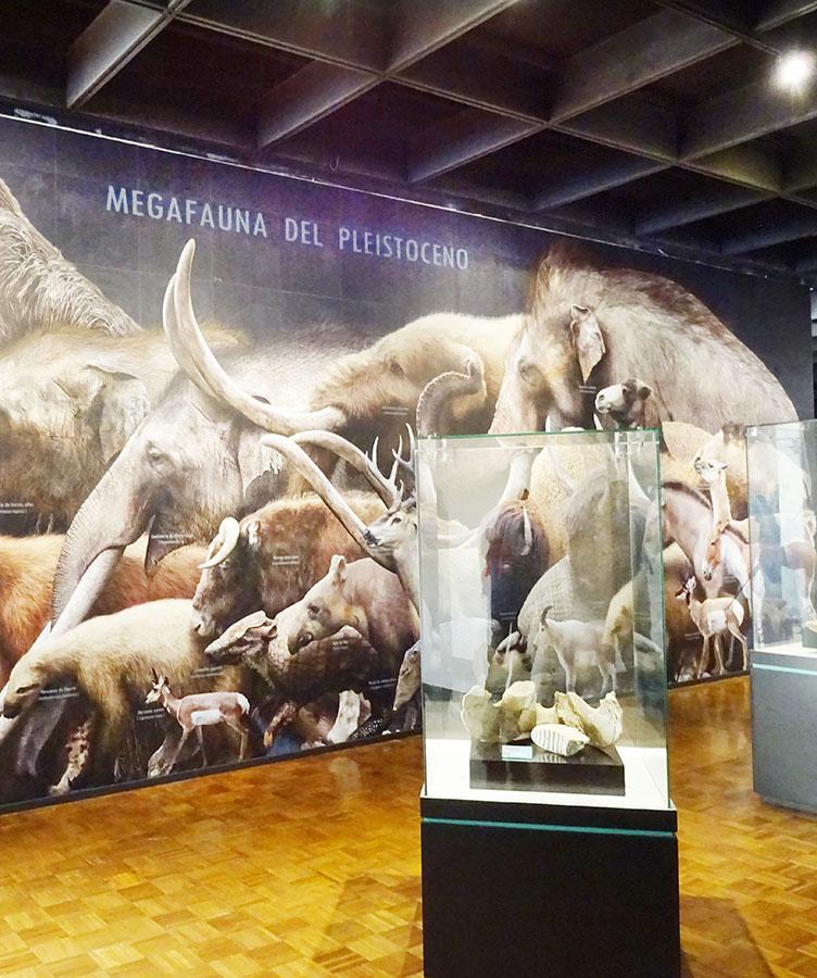 Sala de Paleontología del Museo Regional del INAH Puebla. Fotografía: Jorge Herrera, 2019