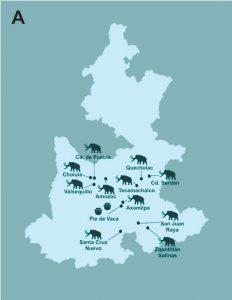 A) Lugares en el estado de Puebla en los que más frecuentemente se han encontrado fósiles de proboscí- deos (Autor: Jorge Herrera, elaborado con información de [3-6]);