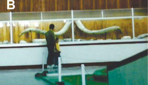 B) Par de defensas de mamut halladas por Moisés Cabrera y expuestas en el extinto Museo de Historia Natural de Puebla (Fotografía cortesía del Arq. Enrique Martínez Molina);