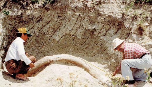 Moisés Cabrera excavando una defensa de mamut en los alrededores de Valsequillo. Fotografía: María Eugenia Cabrera, sin fecha.