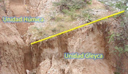 Figura 1. La imagen corresponde a la localidad de Santa Cruz Nuevo donde se muestra la unidad húmica de colores más oscuros y a la base se observa parte de la unidad gleyca, colores claros. De estas dos unidades es de donde se han recuperado la mayor cantidad de fósiles. Fotografía: Rosa Elena Tovar.